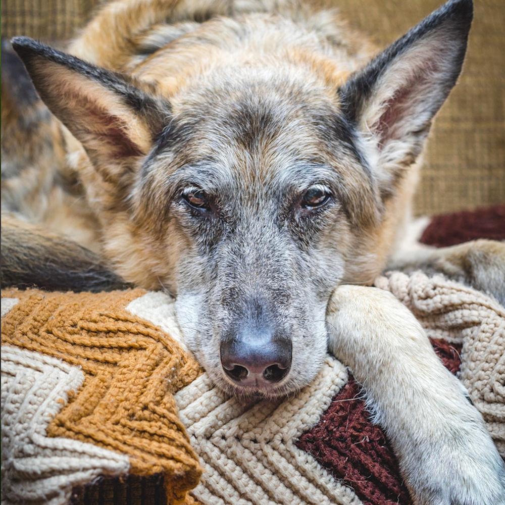 Hund Vergiftung Anzeichen