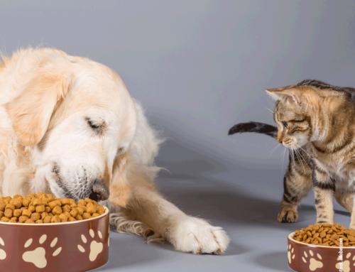 Weshalb Dein Hund kein Katzenfutter fressen sollte
