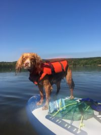 Wildborn Hundefutter bei Hitze