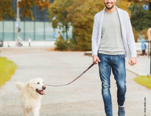 Hunde und das City-Leben