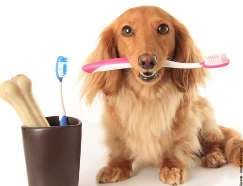 So bleiben die Hundezähne gesund