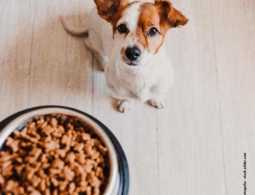 Der große PETOU Hundefutter Test 2020 – die 7 besten Anbieter
