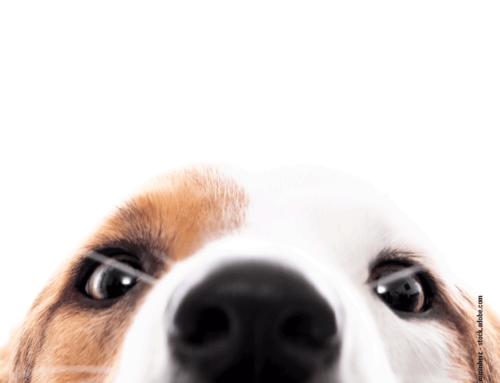 Die Sinne unserer Hunde