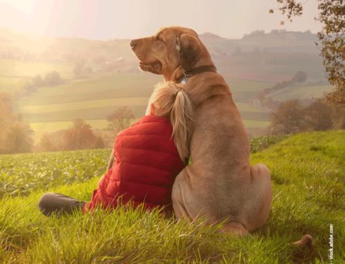 Lebenserwartung unserer Haustiere