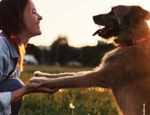 Gelenkgesundheit bei Hunden