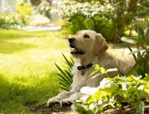 Garten nach Hundegeschmack