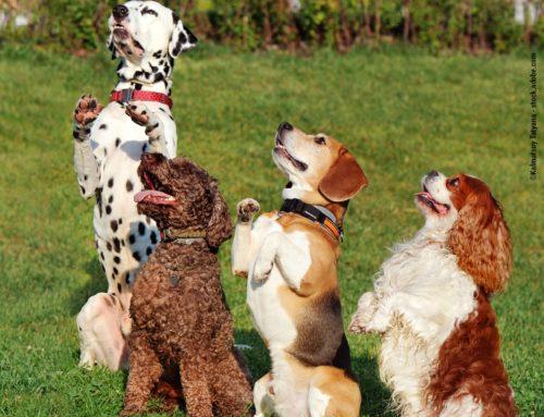 Rasse- oder Mischlingshund