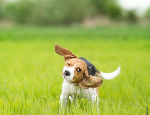 Warum sich Hunde schütteln