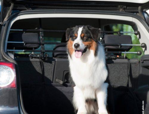 Fahrschule für den Hund